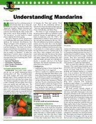 Understanding Mandarins - Citrus Treesource Nursery