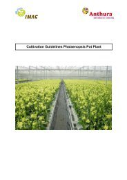 Phalaenopsis pot plants - Anthura