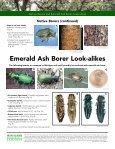 Native Borers and Emerald Ash Borer Look-alikes - Page 2