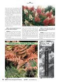 Grower goes on safari to find the unusual - Proven Winners - Page 3