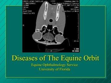 Equine Orbit - University of Florida