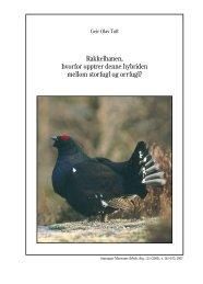 Rakkelhanen, hvorfor opptrer denne hybriden mellom storfugl og ...
