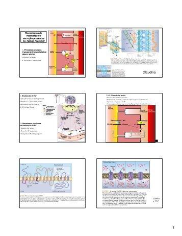 Mecanismos tubulares e concentração em contra-corrente
