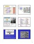 Mecanismos tubulares e concentração em contra-corrente - Page 4