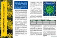 Objetivo estratégico D - Reserva da Biosfera da Mata Atlântica