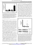 Effective Inhibition of the Epidermal Growth Factor/Epidermal Growth ... - Page 5