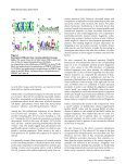 A tale of two symmetrical tails - Shahid Beheshti Faculties and PhD ... - Page 4