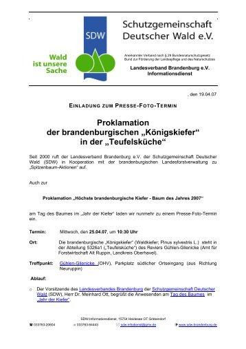 """Proklamation der brandenburgischen """"Königskiefer"""" in der ... - SDW"""