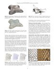 Packing circles and spheres on surfaces - Institute of Geometry - Page 6
