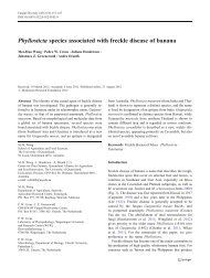 Phyllosticta species associated with freckle disease of ... - Springer