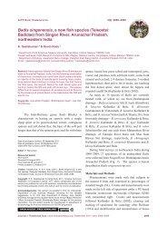 Badis singenensis, a new fish species - Journal of Threatened Taxa