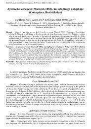 Xylomedes coronata - site aberlentomo.fr