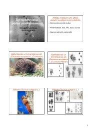 Pedas Kolka_OrnicansA_2007.pdf