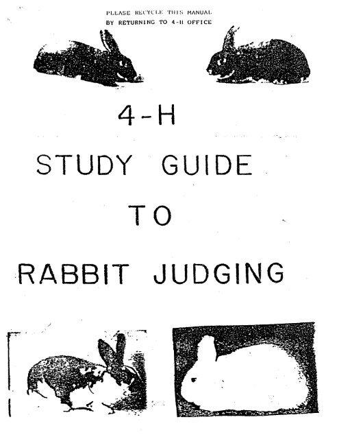 Judging - Rabbit