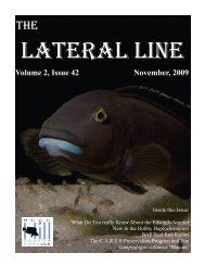 Volume 2, Issue 42 November, 2009 - Hill Country Cichlid Club