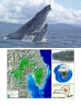 MAMABAY LAND/SEASCAPE - Wildlife Conservation Society - Page 5