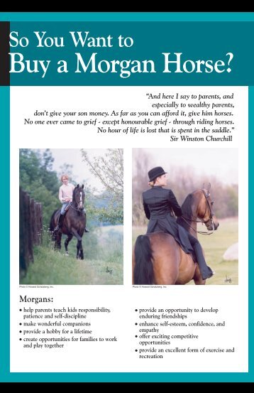 Buy a Morgan Horse? - American Morgan Horse Association