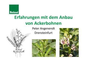 Erfahrungen mit dem Anbau von Ackerbohnen - Vom Acker in den ...