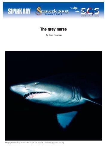 The grey nurse