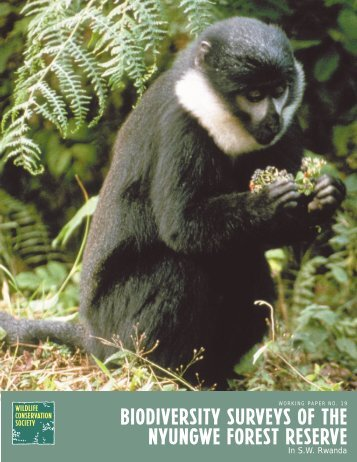 Biodiversity Surveys of the Nyungwe Forest Reserve in SW Rwanda