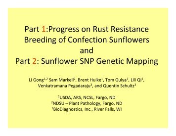 Progress on Rust Resistance Breeding of Confection Sunflowers