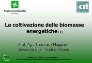 colture da biomassa per produzione di energia miscanto