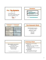 Ch 4-A The Bacteria [Compatibility Mode] - De Anza College