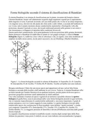 Fanerofite - Conservazione degli alimenti