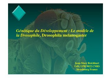 Drosophila Melanogaster Fichier PDF - e-nautia