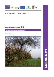 I campi baulati del casalasco - Il territorio come ecomuseo ...