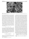 Large-Scale Synthesis of Single-Crystalline Iron Oxide Magnetic ... - Page 5
