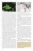 Original Mayan Cotton - Maya Archaeology - Page 3