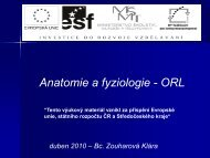 ORL-anatomie a fyziologie