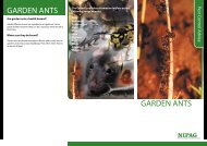 GARDEN ANTS GARDEN ANTS - Ards Borough Council
