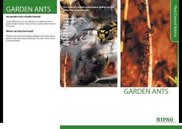 GARDEN ANTS GARDEN ANTS - Ards Borough Council
