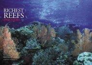 Richest Reefs - Indonesia - Seven Seas