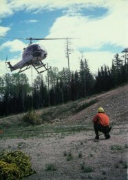650 Helicopters Now Aid Tree Planting - webapps8