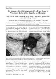 European mink (Mustela lutreola) - De Zoogdiervereniging