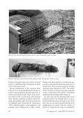 European mink (Mustela lutreola) - De Zoogdiervereniging - Page 2