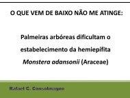 Palmeiras arbóreas dificultam o estabelecimento da hemiepífita ...