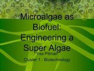 Microalgae as Biofuel: Engineering a Super Algae - COSMOS