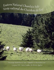 CE 44 - Charolais Banner