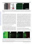 Combined microfluidics/protein patterning platform for ... - Page 3