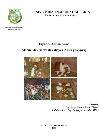 Especies Alternativas: Manual de crianza de cobayos - Centro ...
