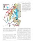 Phylogeographic structure, gene flow and species status in blue ... - Page 3