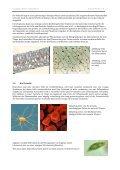 1. Die Zelle - Caucau.ch - Page 4