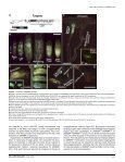 Fatty acid auxotrophy in Drosophila larvae ... - UT Southwestern - Page 5