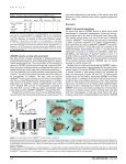 Fatty acid auxotrophy in Drosophila larvae ... - UT Southwestern - Page 6