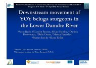 Downstream movement of YOY beluga sturgeons ... - DANUBEPARKS