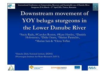 Downstream movement of YOY beluga sturgeons ... - DANUBEPARKS
